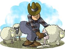 Tagliatrice delle pecore Immagini Stock