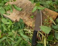 Tagliere con i gambi ed il coltello del fiore Fotografia Stock Libera da Diritti