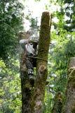 Taglierina dell'albero Immagine Stock