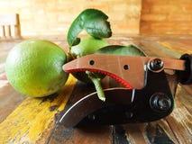 Taglierina della frutta Immagini Stock Libere da Diritti