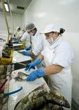 Taglierine dei pesci nell'azione Immagini Stock