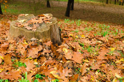 Taglio coperto dalle foglie di autunno in parco Immagini Stock Libere da Diritti