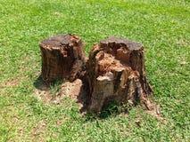 Taglio degli alberi Immagine Stock