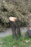 Taglio degli alberi Immagini Stock
