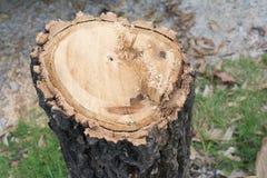 Taglio degli alberi Immagine Stock Libera da Diritti