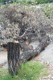 Taglio degli alberi Fotografie Stock