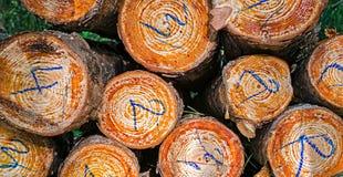 Taglio degli alberi, impilato e numerato immagini stock libere da diritti