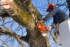 Taglio dei rami dell'albero Fotografia Stock