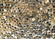 Taglio del bambù Immagini Stock Libere da Diritti