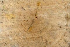 Taglio del barilotto della betulla. Fotografie Stock Libere da Diritti