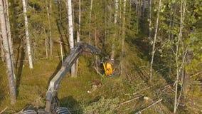 Taglio del legname Abbattimento degli alberi stock footage