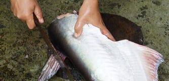 Taglio del pesce Fotografie Stock Libere da Diritti