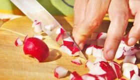 Taglio del ravanello del giardino per insalata Fotografia Stock