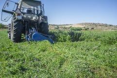 Taglio del trattore ed alfalfa falciante Fotografia Stock