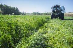 Taglio del trattore ed alfalfa falciante Immagine Stock