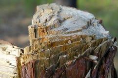 Taglio del tronco di albero con un'ascia immagini stock