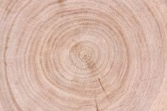 Taglio del tronco del pino Fotografia Stock