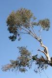 Taglio dell'albero Immagine Stock