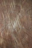 Taglio dell'albero Fotografie Stock Libere da Diritti