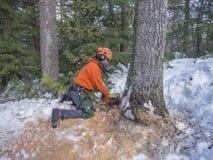 Taglio dell'albero da un boscaiolo Fotografie Stock