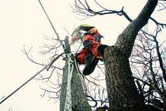 Taglio dell'uomo dell'arboricoltore rami con la motosega ed il tiro su una terra Il lavoratore con il casco che lavora all'altezz immagini stock libere da diritti
