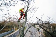 Taglio dell'uomo dell'arboricoltore rami con la motosega ed il tiro su una terra Il lavoratore con il casco che lavora all'altezz immagine stock libera da diritti