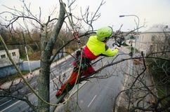 Taglio dell'uomo dell'arboricoltore rami con la motosega ed il tiro su una terra Il lavoratore con il casco che lavora all'altezz fotografie stock libere da diritti