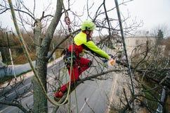 Taglio dell'uomo dell'arboricoltore rami con la motosega ed il tiro su una terra Il lavoratore con il casco che lavora all'altezz fotografie stock