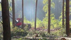 Taglio della foresta, mietitrice del legname, taglio della foresta con l'attrezzatura speciale archivi video