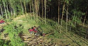 Taglio della foresta, mietitrice del legname, taglio della foresta con l'attrezzatura speciale video d archivio