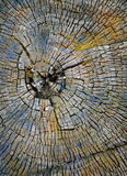 Taglio di un albero fotografia stock