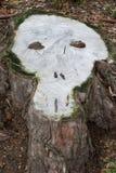 Taglio di un albero sotto forma della palella ceppo Immagini Stock Libere da Diritti
