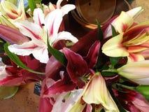 Taglio fresco Lily Flowers da vendere dentro un negozio floreale Immagine Stock Libera da Diritti