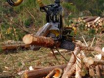 Taglio meccanico degli alberi in una foresta Immagine Stock Libera da Diritti