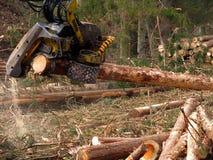Taglio meccanico degli alberi in una foresta Fotografie Stock