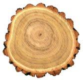 Taglio rotondo dell'albero di locusta nera di robinia Fotografie Stock