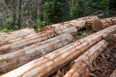 Taglio tradizionale di legno di pino a mano Fotografia Stock