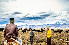 Tagong grassland, China on 12th May 2015 - View on Tibetan nomads and Yak cattles royalty free stock image