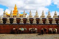 Tagong temple, a famous Sakya Tibetan Buddhism temple Stock Photography