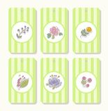 Tags, labels, flowers, plants, berries, striped, green. Colored, flat tags, labels with flowers, berries and twigs in a white circle on a green striped Royalty Free Stock Images