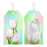 Tags with white tulip. Tags with spring flowers on a light colored background. Vector realistic white tulips Stock Photo