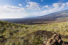 Tagus Cove, volcanic rock and bushes. At Isabela, Galapagos, Ecuador Royalty Free Stock Photography