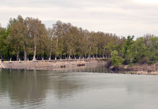 Tagus river with trees Royalty Free Stock Photo