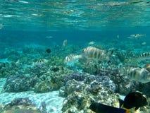 Tahaa, francuski Polynesia Zdjęcie Stock