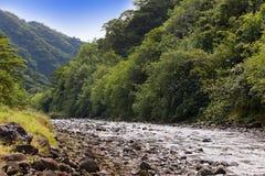 Tahiti. Bergflod Royaltyfria Bilder