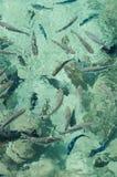 Tahiti fiskar! Royaltyfri Fotografi