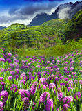 Tahiti. lupines Flower field and mountain Stock Photo
