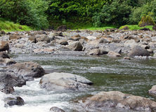 Tahiti. Mountain river Stock Photography