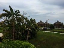 Tahiti-Palmen und -gras lizenzfreies stockfoto