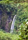 Tahiti. Tropical nature Stock Photos